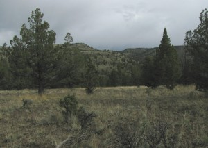 Site 2: Hiltop, photo taken near recording location.